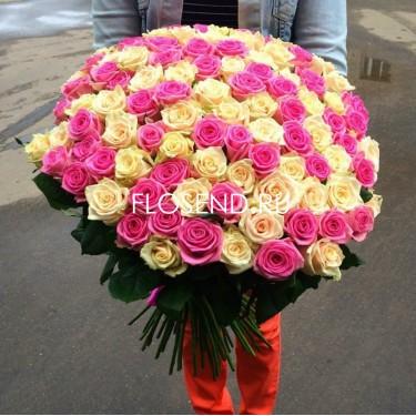 101 Розовая и кремовая роза